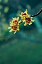春暖花开,发几张拍的小花