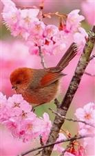 春去花还在,人来鸟不惊。
