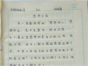 """2019""""外国语杯""""杞县学生作文大赛-013杨佳露"""