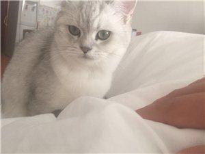 猫帅哥找女盆友
