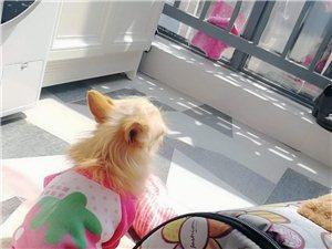 小狗在西門走丟紫色衣服小體型