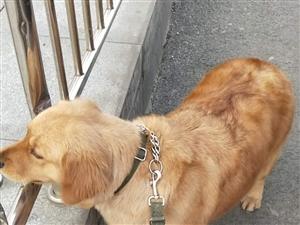 求购狗笼一个
