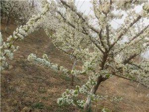 春风不妒,花朵轻盈