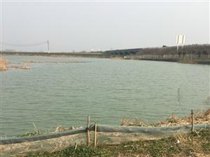 灵璧告诉出口北500米.有三十多亩鱼塘向外转租.有需要的可以联系我