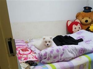 找个真心养狗的,由于家里不允许养,急出手