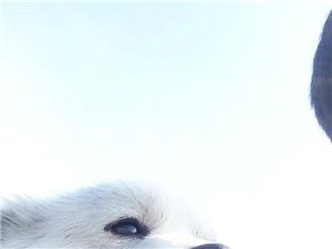 找狗狗??