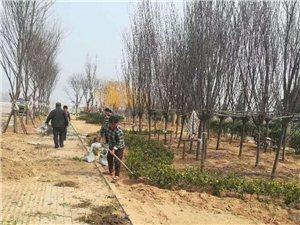 《植树》仲春蓓蕾吐芳香,南北雍丘种树忙。待到青蝉鸣盛夏,百灵避暑好乘凉。