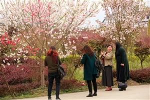 湄潭的春天美如画,到处都是春暖花开。