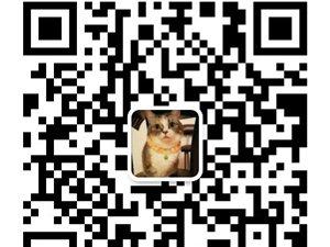 诚信卖猫,各种品类,欢迎咨询