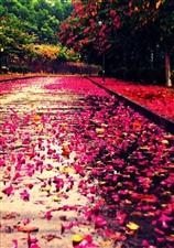 花开花落又一季