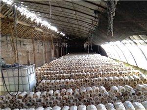 蘑菇大棚转让