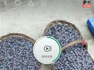自家产的无核黑枣,还有千余斤,真空包装,15833007031