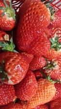 诱人的草莓,专属热爱