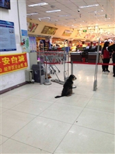 文明遛狗,文明逛超市,点赞!