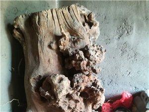 古树根可做根雕