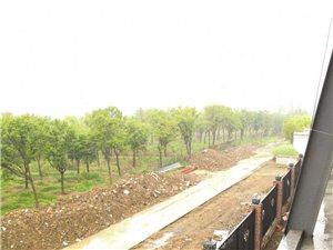 阜�西湖白行村有700方土需要清理