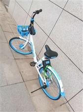 共享单车入驻鄱阳不足一月,便有人经不住素质考验!