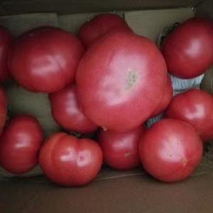 普羅旺斯西紅柿哪里買?
