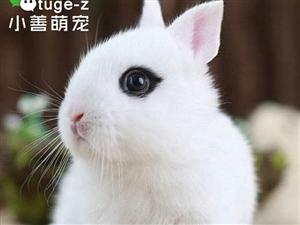 出自養小兔子