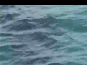 凤凰岛惊现鲨鱼