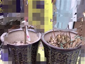 两个大花盆处理了,两个50块钱