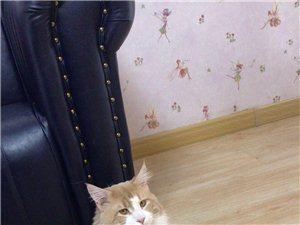 喵咖元寵物生活用品館