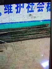 大量求够杆子薄  软薄  抓鱼用的。
