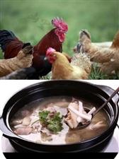 超好吃的纯椰子鸡汤