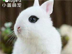 自養的小兔子,白色,黑色,花色都有。