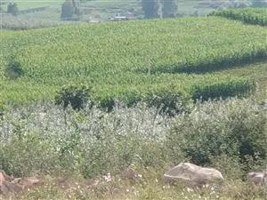 位于双河去柏山分路新关山处有一约30亩果园转让,水电路三通!土地就在大路边。不远处就是杨柳塘大水库。...