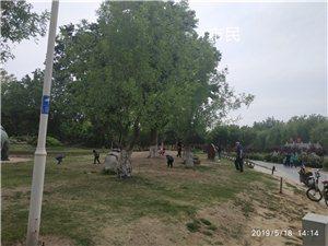 青州南阳河公园保安和市民随意践踏草坪