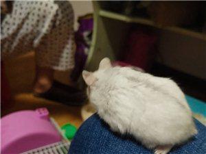 �}鼠出售