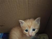 自己家猫咪下的猫仔,要求能对猫咪好的,负责的。