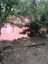 关帝庙镇金屯村东南角一个坑被旁边一个养猪的排放污水污染严重,已经好几年了,以前是黑水,现在变成红色的