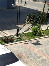 树倒下几天了没人管
