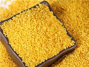 黄小米充氮/袋