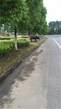 今天我在�_�l�^中�d路�l�F�R路�上�G化��上有好多牛,踩踏丶吃破�哪抢锏沫h境,希望有�P部�T��人去管理!