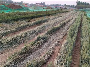 土地及弄作物被黑��萘���