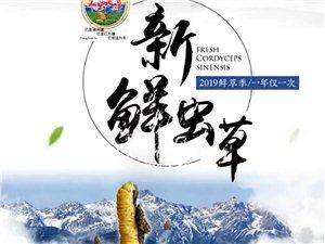 【重磅福利来袭】 西藏那曲新鲜冬虫夏草