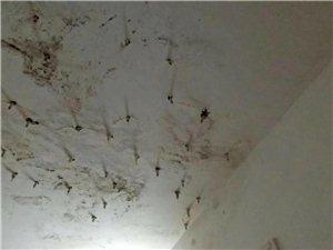 樓房防水補漏漏水治水