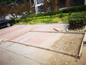 �`建垃圾桶�_子,占小�^公共�位、破�木G地