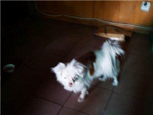 万元寻爱犬