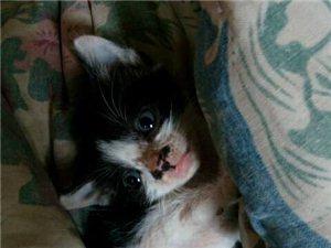 小奶貓送人