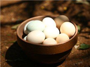 文武土鸡蛋