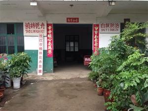 《枝江市桃林白蚁防治技术服务部》