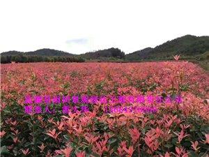 盐源县雨田景观绿化工程有限责任公司