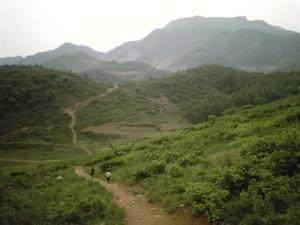 光山苗木出售-桂花香樟-信阳神仙寨园林