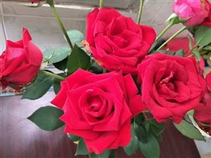平果玫瑰花园