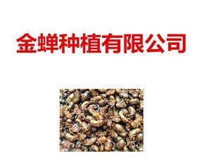 砀山县卓燊(shen)金蝉种植有限公司