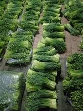 肃宁县大众蔬菜种植专业合作社
